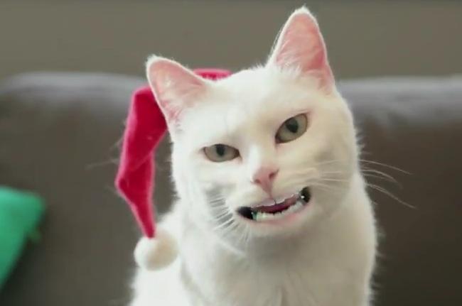 animale cu dinti (16)
