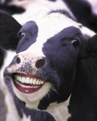 animale cu dinti (18)
