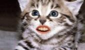 animale cu dinti (19)