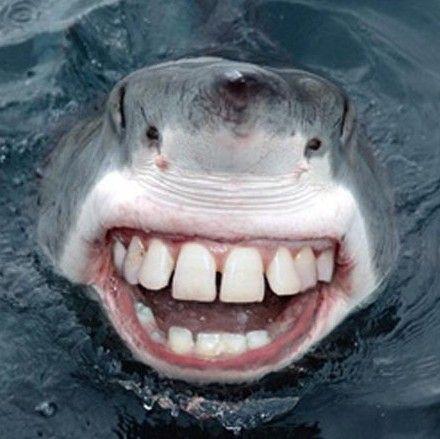 animale cu dinti (2)