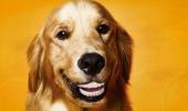 animale cu dinti (21)