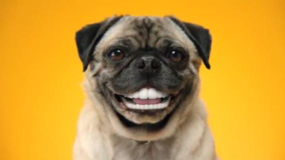 animale cu dinti (23)