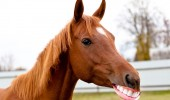 animale cu dinti (3)