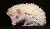 animale cu dinti (4)