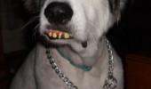 animale cu dinti (8)