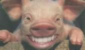 animale cu dinti (9)