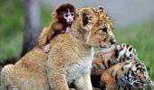 Prietenii neașteptate între animale | IMAGINI IMPRESIONANTE
