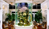 aquarium-company-that-designs-service-supplies-aquariums-and