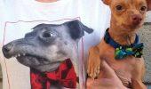 Faceți cunoștință cu Tuna, câinele cu chip de SIMPSONS, 375.000 de FANI și propria sa LINIE DE MĂRFURI