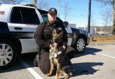Incident SURPRINZĂTOR! Uite ce a pățit un câine polițist în timpul unei intervenții