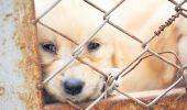 Samsarii de câini, zero compasiune!