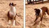 Cum reacționează un câine când gustă pentru prima dată lămâie | VIDEO