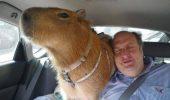 INCREDIBIL, dar adevărat: TOP 10 Cele mai CIUDATE animale de companie | GALERIE FOTO