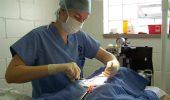 Lista cabinetelor veterinare care sterilizeaza gratuit in Bucuresti!