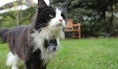 Pisica Big Brother! Are o cameră video ataşată la gât şi oamenii urmăresc tot ce face! Află de ce!