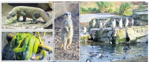 Chester Zoo din Anglia, adevărata arcă a lui Noe, în 45 de hectare | GALERIE FOTO