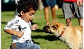 """""""Ajutoooooooooooooooooor! Am fost muşcată şi acum nu mă mai pot apropia de câini"""""""
