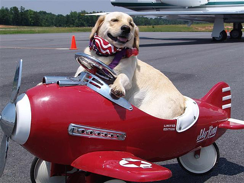 dog-flying-red-plane