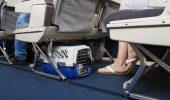 Călătoria cu un animal de companie în UE va deveni mai simplă