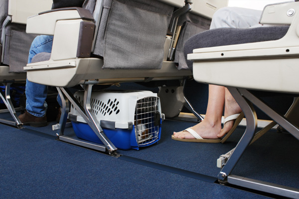 dog-in-carrier-on-plane