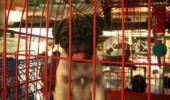 dog_cartimar-300x225