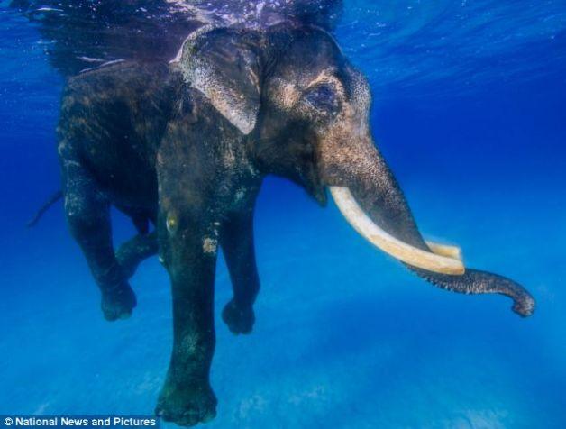 elefant_2
