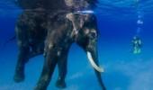 elefant_3