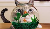 fish-tank-cats-goldfish-eyes-green-grass-shop-132350