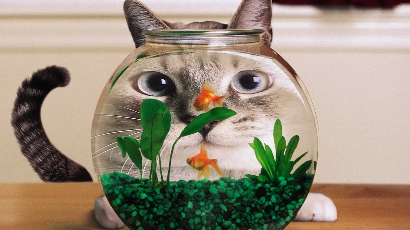 fish-tank-cats-goldfish-eyes-green-grass-shop-132350