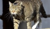 Pisica ministrului britanic de finanţe ar putea fi agent dublu