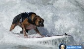 funny-dogs-surfing-on-wave-water-sea-pics-images-12