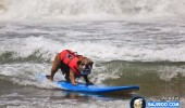 funny-dogs-surfing-on-wave-water-sea-pics-images-15
