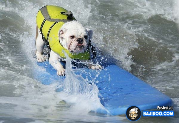 funny-dogs-surfing-on-wave-water-sea-pics-images-20