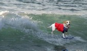 funny-dogs-surfing-on-wave-water-sea-pics-images-25