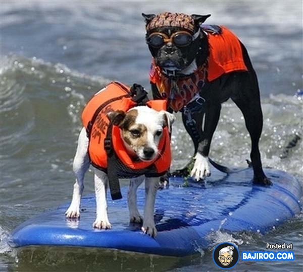 funny-dogs-surfing-on-wave-water-sea-pics-images-29