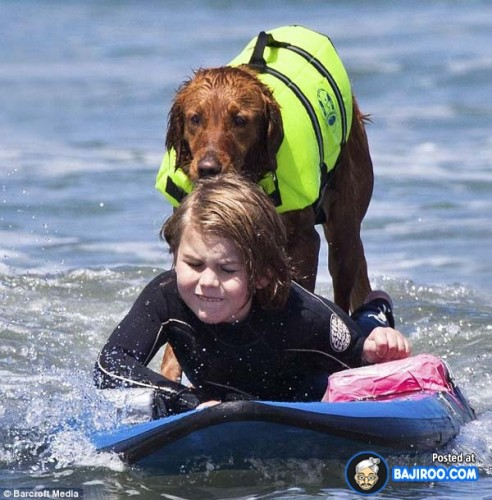 funny-dogs-surfing-on-wave-water-sea-pics-images-3
