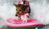 funny-dogs-surfing-on-wave-water-sea-pics-images-6