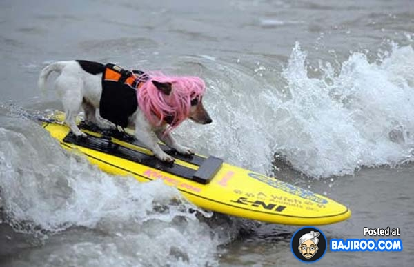 funny-dogs-surfing-on-wave-water-sea-pics-images-8