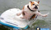 Atentieeee, caini la apa! A venit caldura si e rost de balaceala! Priviti-i pe acesti profesionisti in surf!
