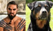 Game of Thrones s-a transformat în Game of Bones! Vezi varianta canină a actorilor din Urzeala Tronurilor