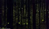 licurici 5