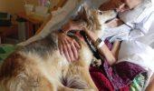 Cele 5 simţuri SUPRANATURALE ale câinelui tău