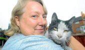 Când stăpânul nu-i acasă, pisica dă FOC LA CASĂ | FOTO