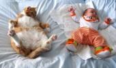 pisici somn (1)