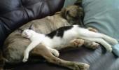 pisici somn (10)