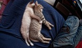 pisici somn (11)