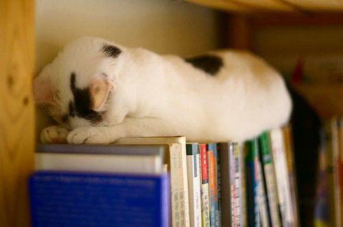 pisici somn (12)