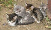 O familie de pisici locuiește în căsuța unor bufnițe