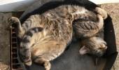pisici somn (15)