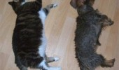 pisici somn (17)